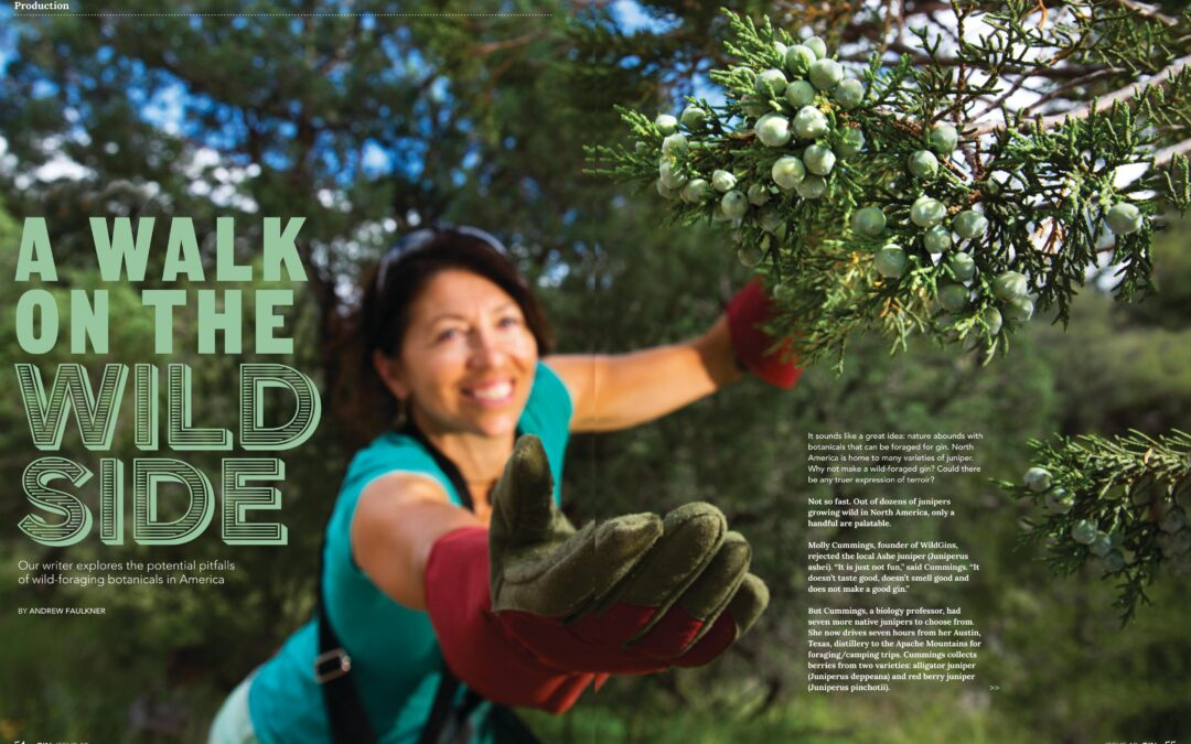 Gin Magazine – A Walk on the Wild Side by Andrew Faulkner